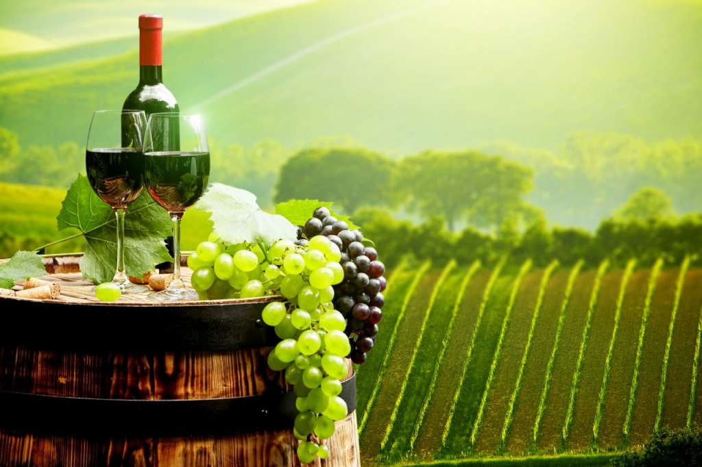 drinks_wine_grapes_442695
